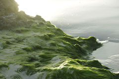 Seaweed on the sand. Stock Photos