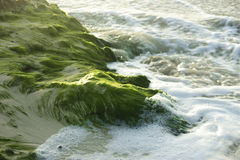 Seaweed on the sand. Royalty Free Stock Photography