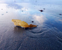 Seaweed_Sand_Reflection Royalty-vrije Stock Afbeelding