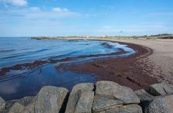 Seaweed on sandy beach. In Skrea, Falkenberg, Sweden in June Stock Photography
