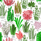 Seaweed seamless pattern. Sea weed fur vector background for marine fashion Royalty Free Stock Images