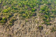 Seaweed on seashore Stock Image