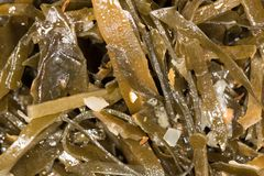 Seaweed. Photo of abstract background Royalty Free Stock Image