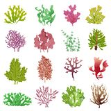 Seaweed set. Sea plants, ocean algae and aquarium kelp. Underwater seaweeds vector isolated collection royalty free illustration