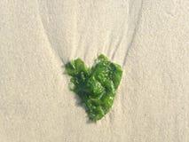 Seaweed in Shape of Heart on Long Beach, Long Island. Stock Photo