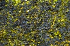 Seaweed sheets Stock Photography