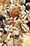 Seaweed, shells and pebbles stock photography