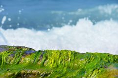 Seaweed on the shore. Seaweed on the bank of the Mediterranean Sea Royalty Free Stock Photos