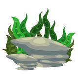 Seaweed with stone vector Royalty Free Stock Images