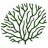 Seaweed stylized vector illustration Stock Photo