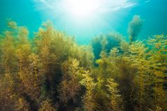 Seaweed and Sunlight Royalty Free Stock Images
