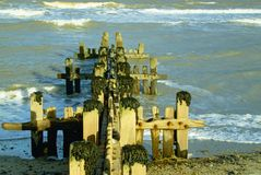 Seaweed topped wooden sea defence`s. Sea defence`s known as groyne`s which are sturdy wooden built structures to stop beach erosion on the north Norfolk coast Royalty Free Stock Images