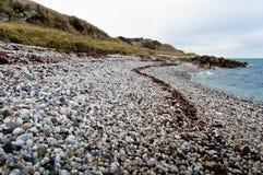 Seaweed Track Stock Photo