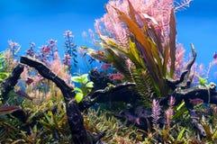 Seaweed underwater Royalty Free Stock Images