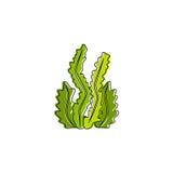 Seaweed Vector Template Stock Photos