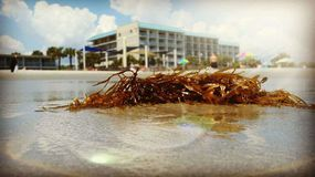 Seaweed Washed Ashore stock image