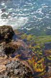 Seaweed in water Royalty Free Stock Images