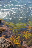 Seaweed in water Royalty Free Stock Photography