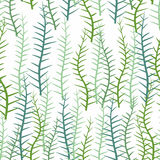 Seaweed on a white background. Seamless pattern of marine plants Stock Photos
