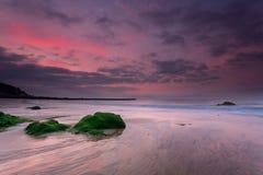 Seaweedrock och gryningen Fotografering för Bildbyråer