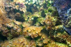 seaweeds royaltyfria bilder