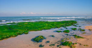 Seaweeds Stock Images