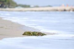 Seaweeds on the beach 1 Royalty Free Stock Photo