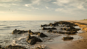 Seaweeds Stock Photography