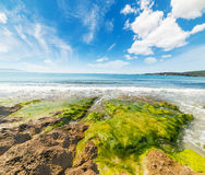 Seaweeds in Le Bombarde beach Stock Images