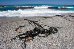 Seaweeds på en fjärrstrand Royaltyfri Fotografi