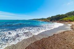 Seaweeds in Piccolo Pevero beach. Sardinia Royalty Free Stock Photos