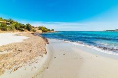 Seaweeds in Piccolo Pevero. Sardinia Stock Photography