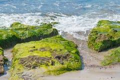 Seaweeds on rocks Royalty Free Stock Image
