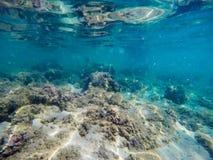 Seaweeds and rocks in Sardinia Royalty Free Stock Photography