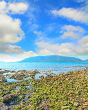 Seaweeds and rocks by the sea in Mugoni beach Stock Image