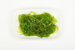 Seaweeds salad on small white dish plate. Portion of Asian traditional greed marinated seaweed salad appetizer on small white dish plate over white background royalty free stock photo