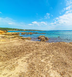 Seaweeds by the sea in Alghero Royalty Free Stock Photos