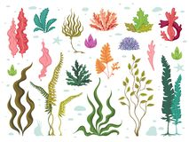 Seaweeds. Sea underwater plants, ocean coral reef and aquatic kelp, hand drawn marine flora set. Vector seaweed cartoon. Sketch aquarium decor stock illustration