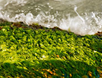 Seaweeds and waves at seashore Stock Images
