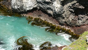 seaweedswirl Arkivbilder