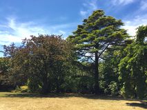 Seawinds trädgård arkivfoto