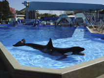 SeaWorld,奥兰多 库存图片