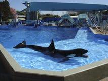 SeaWorld, Ορλάντο στοκ εικόνες