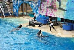 SeaWorld em San Diego Foto de Stock