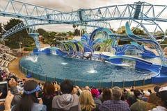 Seaworld för delfindagshow nöjesfält San Diego California royaltyfria bilder