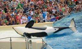 Free SeaWorld In San Diego Stock Photos - 11144583
