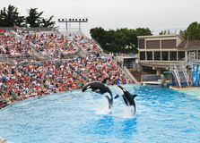 Free SeaWorld In San Diego Royalty Free Stock Photos - 11144618