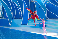 SeaWorld show Stock Image