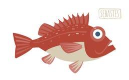 Sebastes (rockfish). Sebastes vector flat style image vector illustration