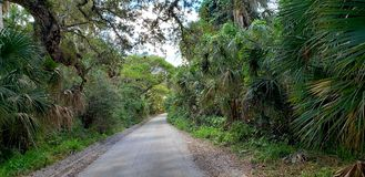 Historic Jungle Trail royalty free stock images